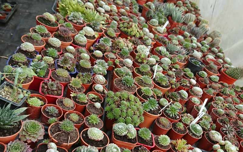 Multiply plants for sale